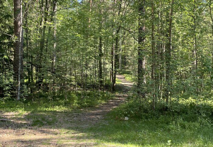 今日のわんこ、鳥のさえずりを聞きながら散歩とご褒美 タンペレおすすめの散歩コース