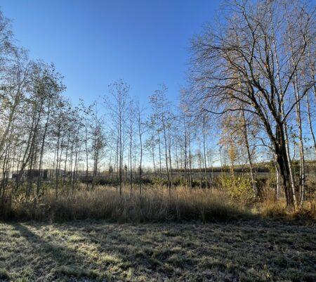 フィンランドのドッグランその4 寒空の下でも湖面のきらきらに癒されます 犬と一緒に気分転換!
